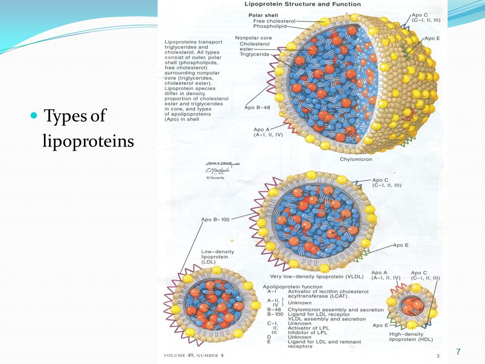 Types of lipoproteins