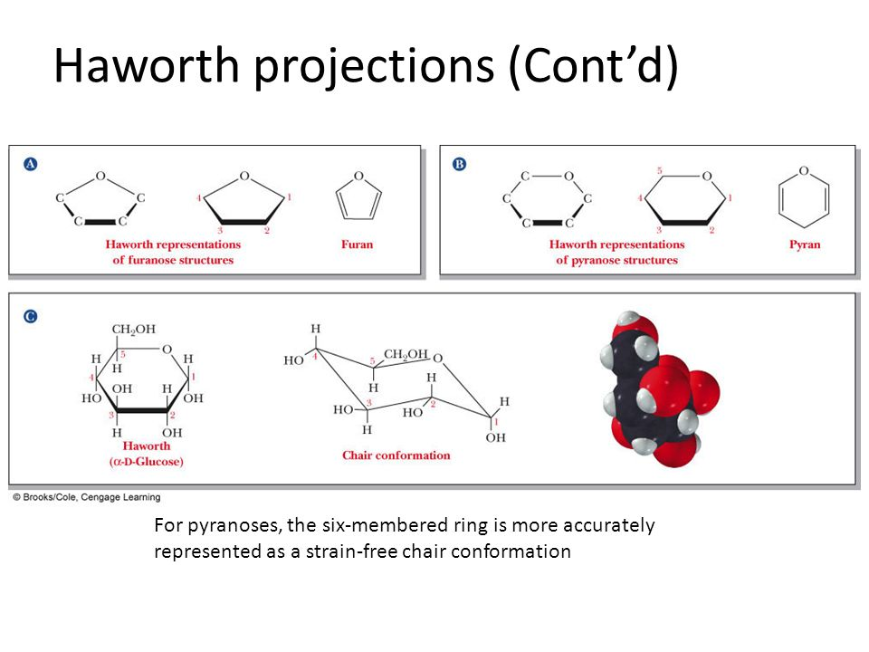 haworth projections This linear representation is called a fischer projectionin its usual bio chemical form, however, the structural ribose is a ring with a covalent bond between the carbon of the aldehyde group (c-1) and the oxygen of the (c-4) hydroxyl group.