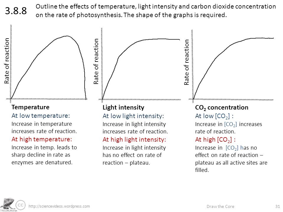 effects of light intensity on the 2015-3-23 effect of light intensity on photosynthesis print  so the aim of this scientific experiment is to investigate the effects of light intensity on the rate of.