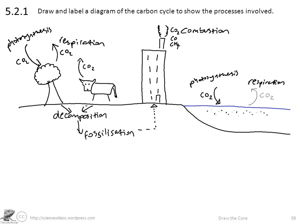 Draw the core label if youre able annotate if youre great ppt 521 draw and label a diagram of the carbon cycle to show the processes ccuart Choice Image