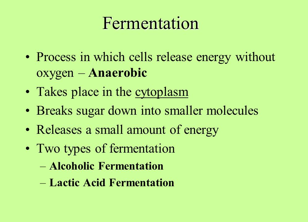 Alcoholic Fermentation And Lactic Acid Fermentation