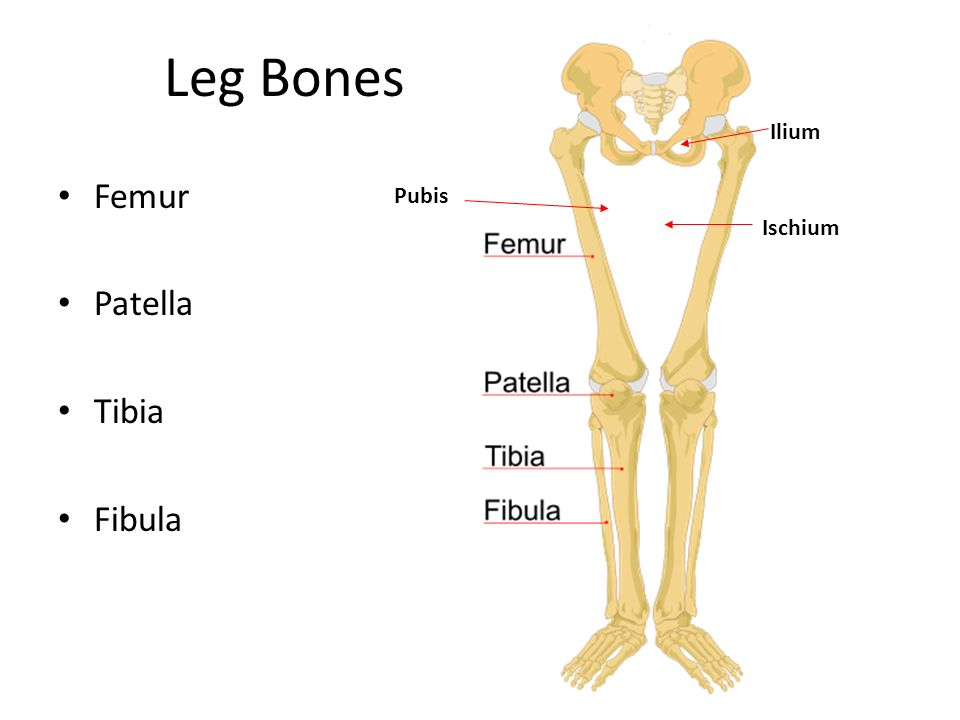 Warm Up List 3 Functions Of The Skeletal System Ppt Video Online