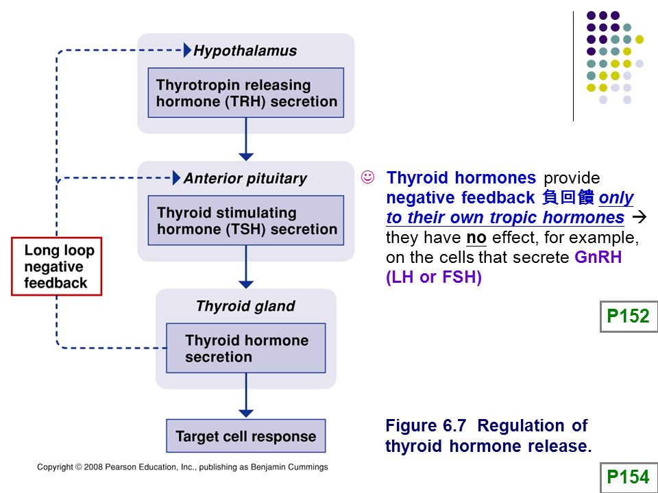 Gnrh Feedback Loop: Chapter 6 The Endocrine System: Endocrine Glands And