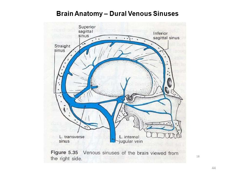 Cerebral Venous Sinuses Anatomy