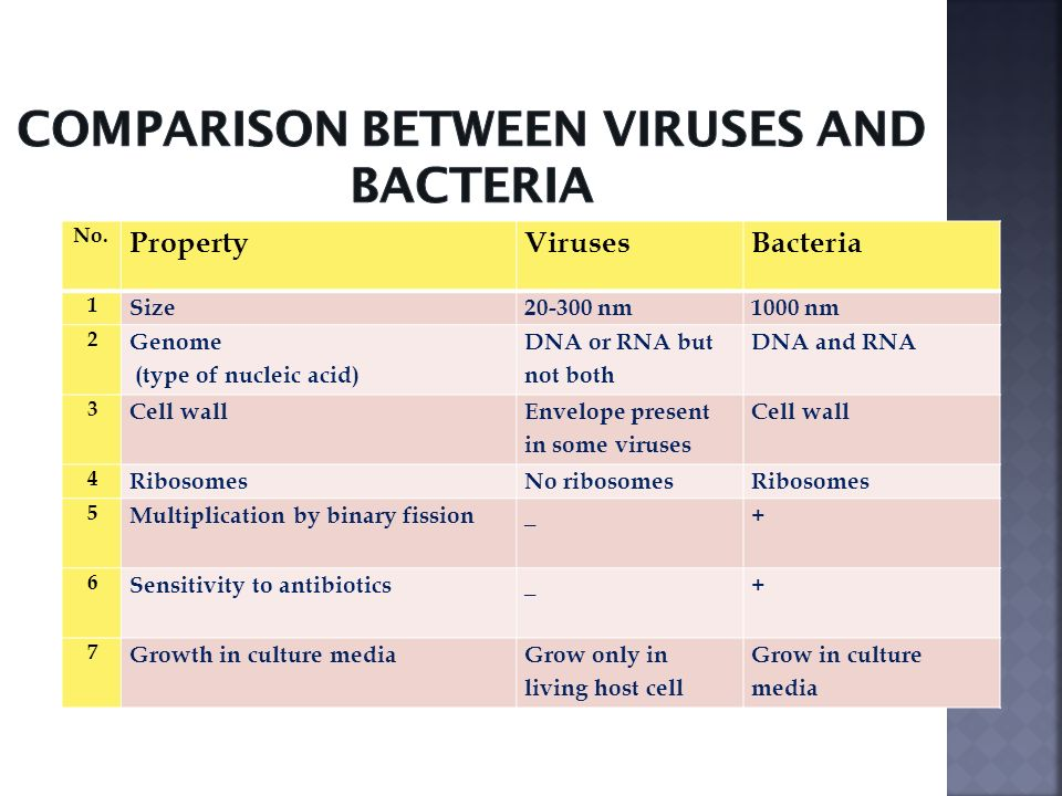 What is the Difference Between a Virus and Bacteria?