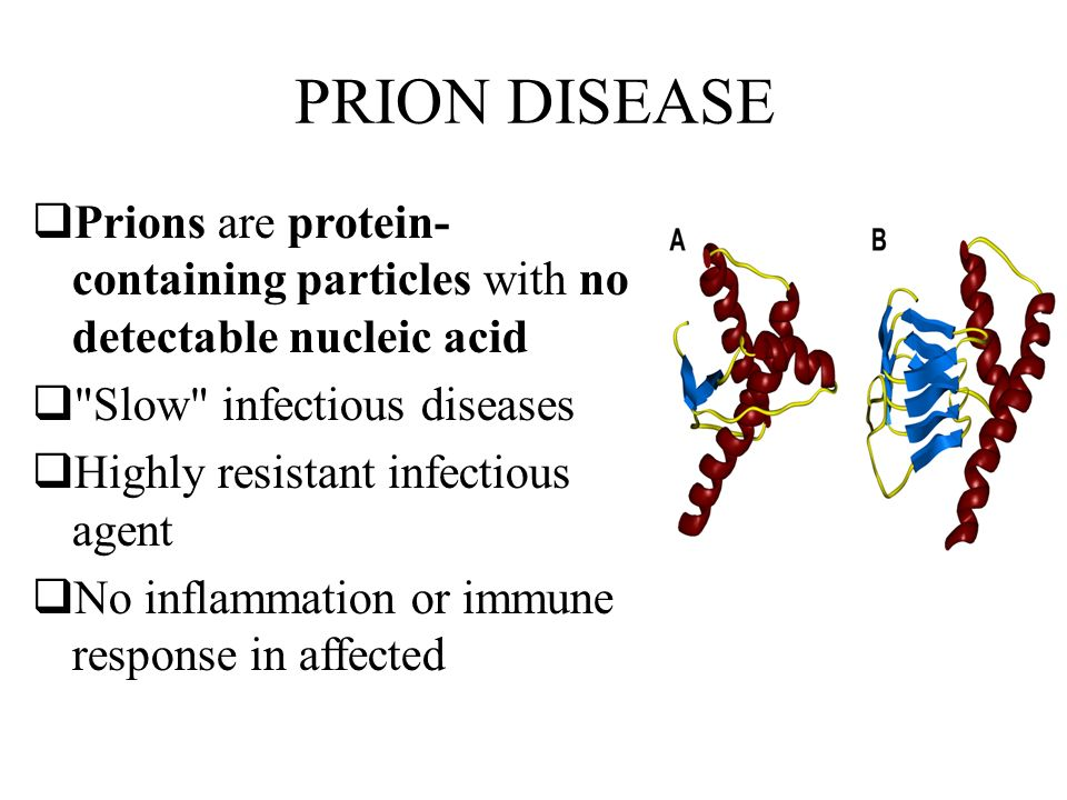 What Are Prion Diseases?
