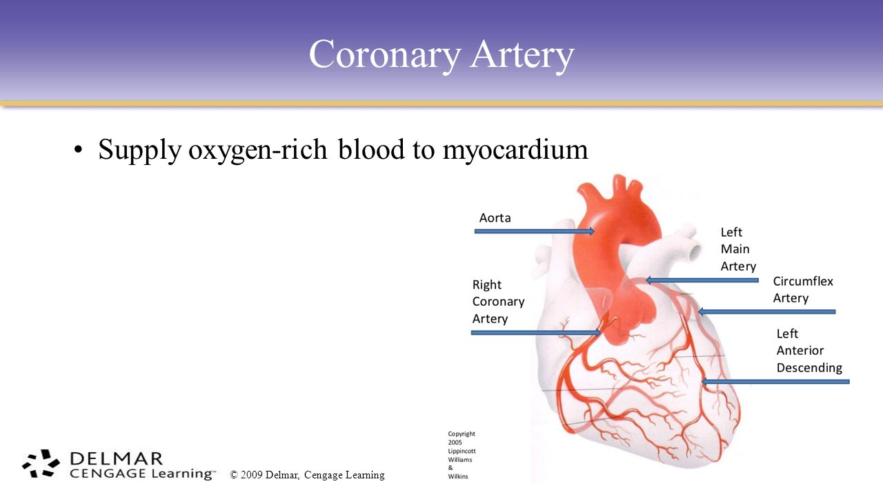 Myocarditis blood and case study