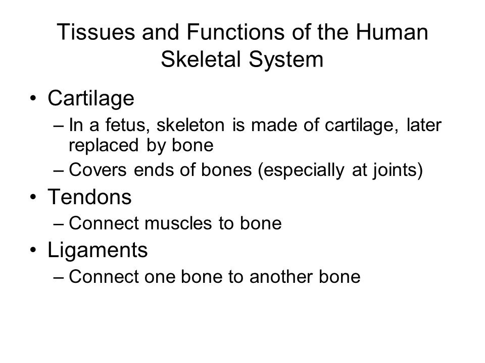 first three questions: - ppt video online download, Skeleton