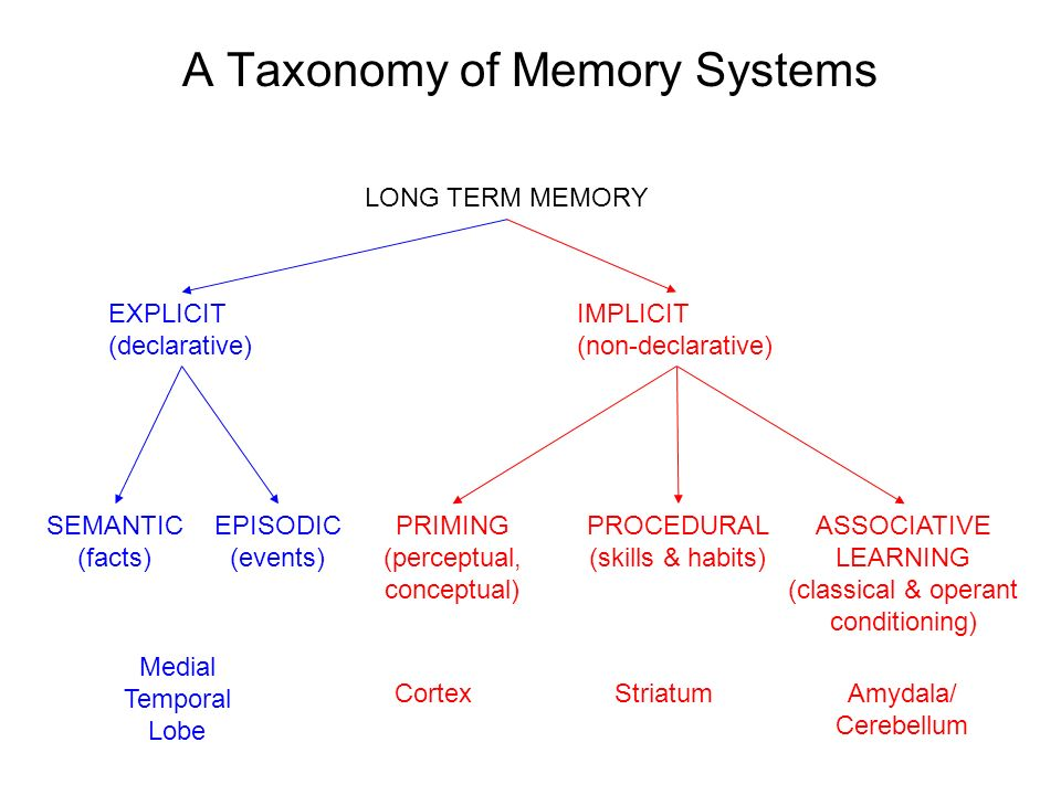 long term memory systems of the human brain Human long-term memory is presumably located in the cortex, exactly why and how is a matter of intense research nowadays i am sure you have experienced that recollecting old memories can take quite some time (sometimes minutes.