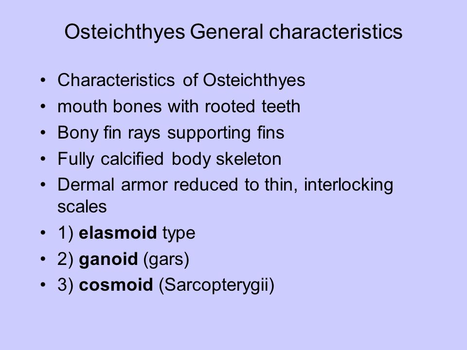 Osteichthyes osteichthyes bony fish origin ppt video for Characteristics of fish