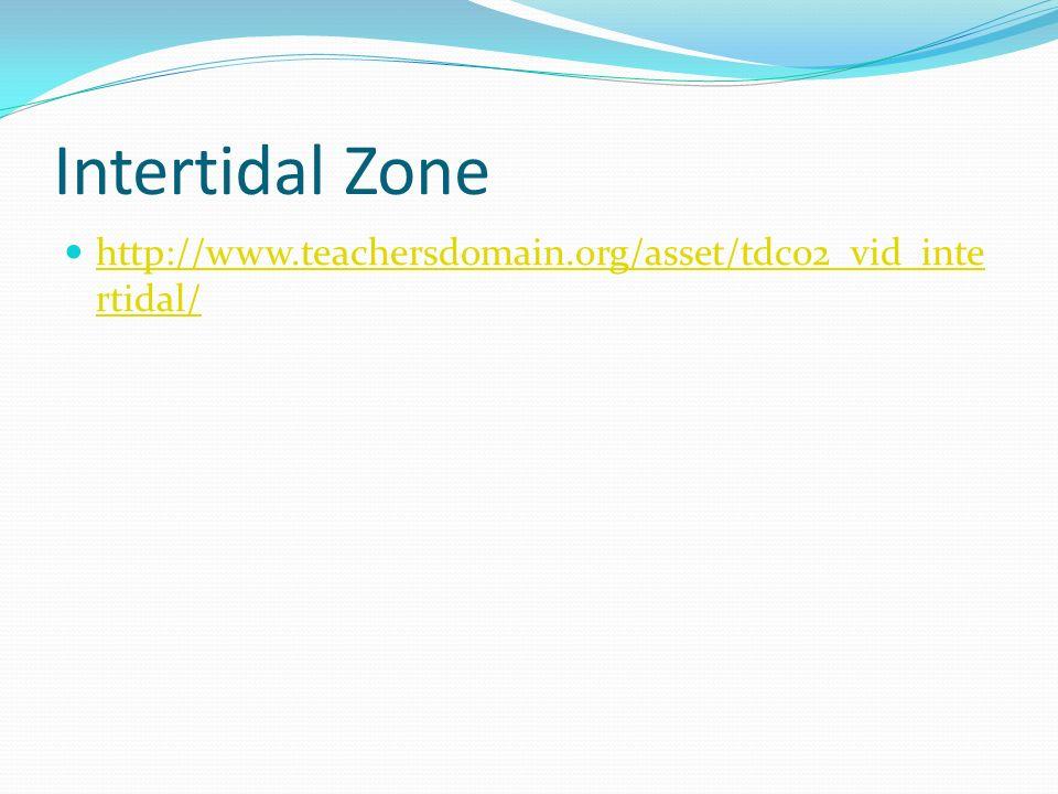 Intertidal Zone http://www.teachersdomain.org/asset/tdc02_vid_intertidal/