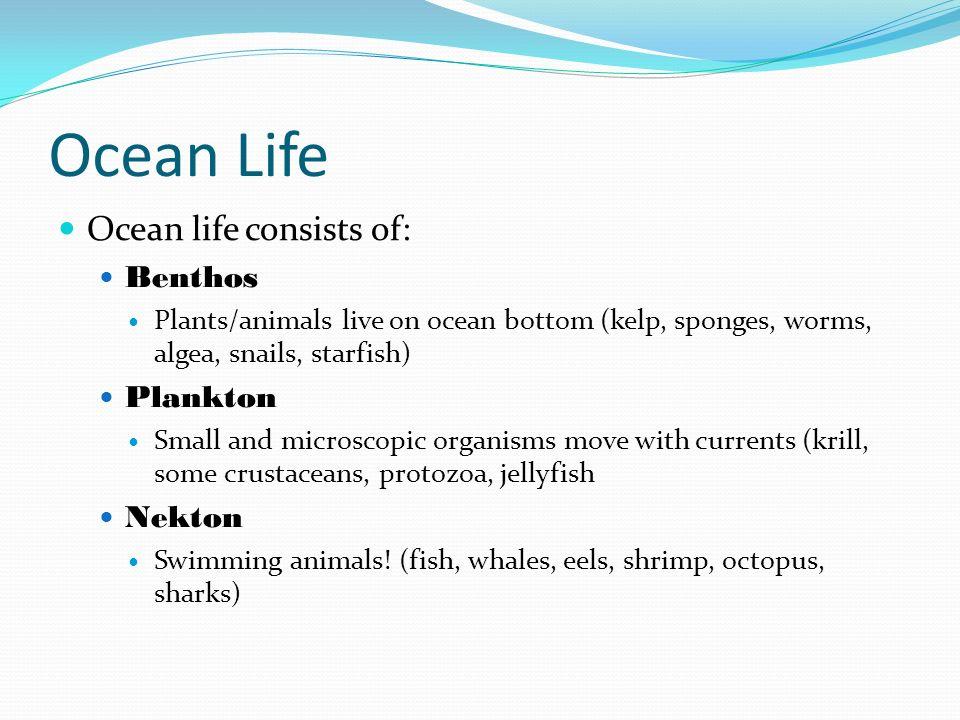 Ocean Life Ocean life consists of: Benthos Plankton Nekton