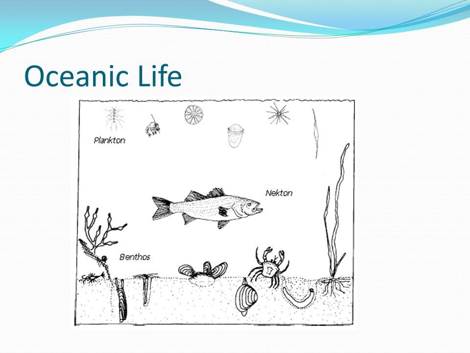 Oceanic Life