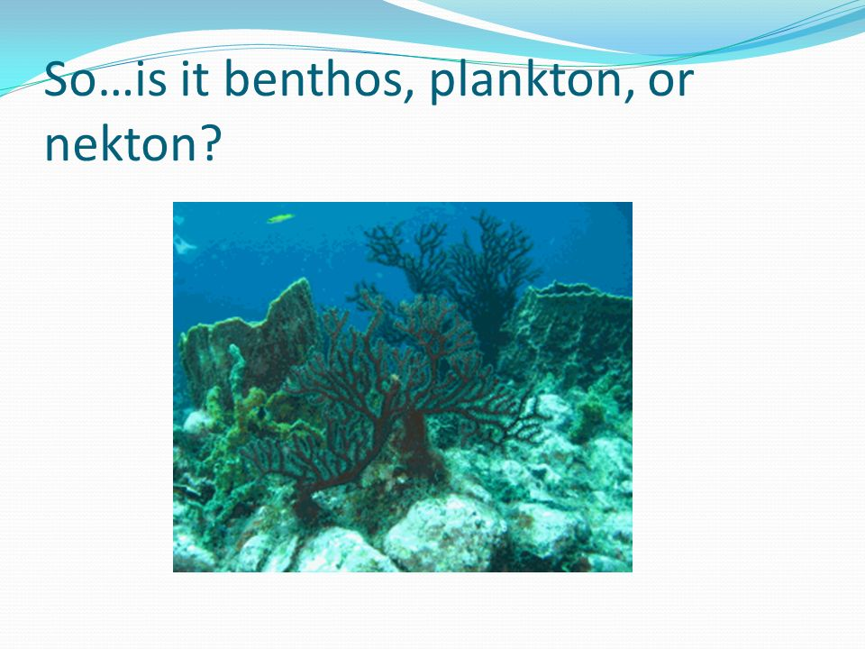 So…is it benthos, plankton, or nekton