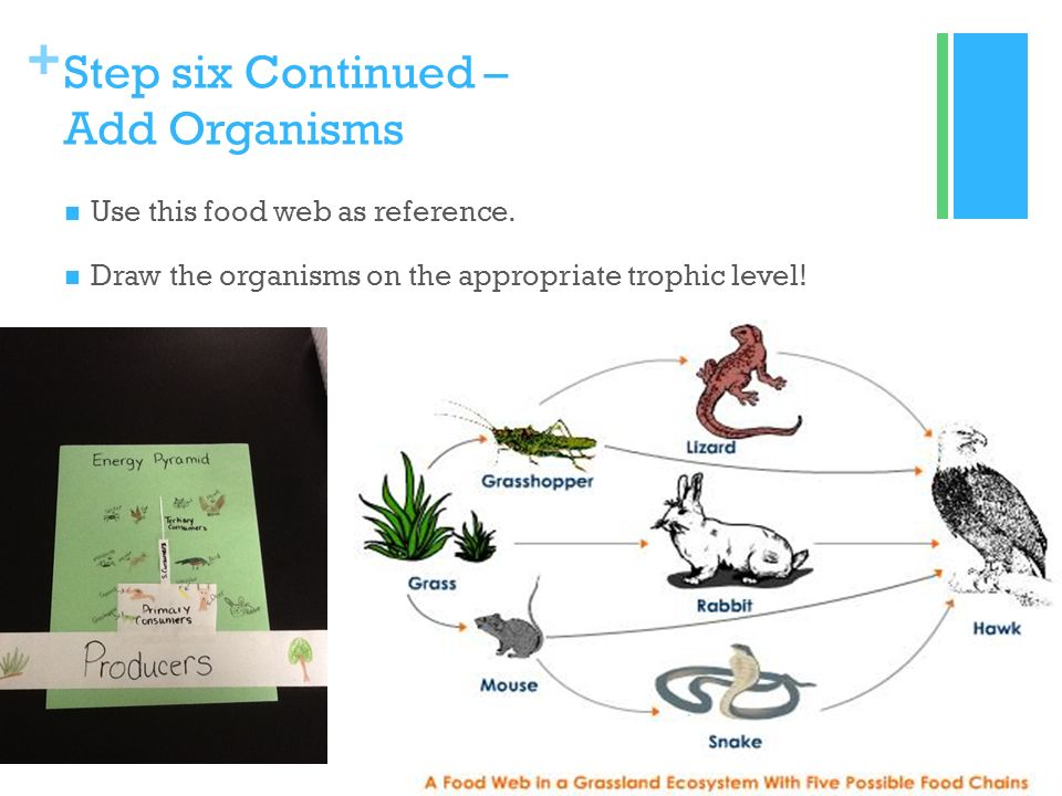 Create A Food Chain With The Following Organisms