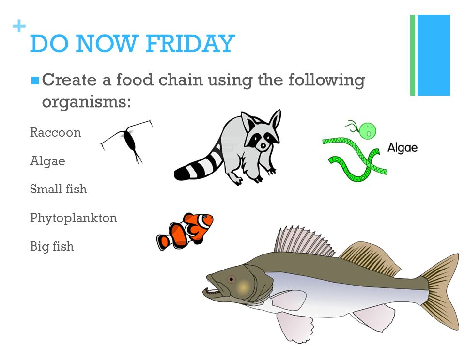 Food chain and food web worksheet doc