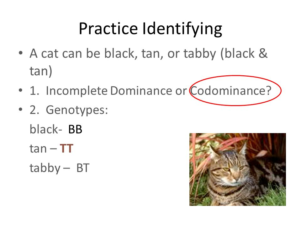 What is Codominance?. - ppt video online download