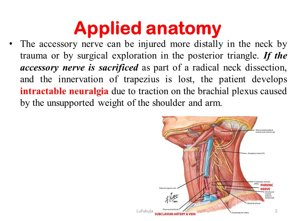 Modern Neck Dissection Anatomy Ppt Pattern - Anatomy Ideas - yunoki.info