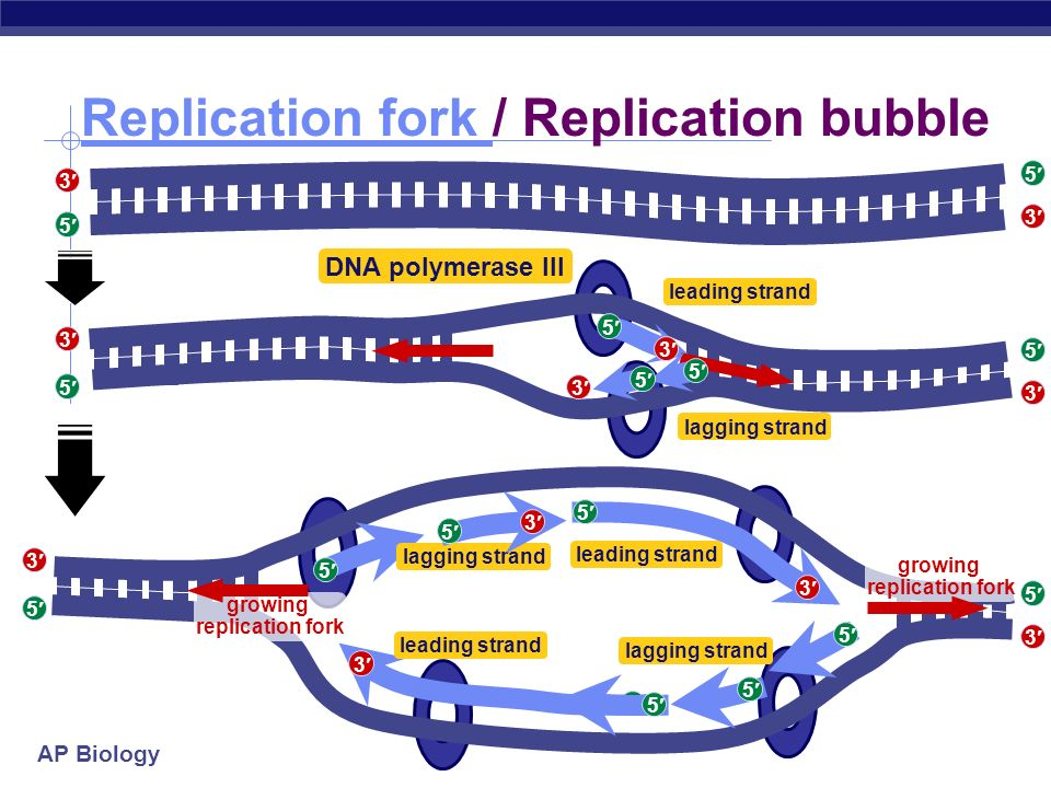 ap bio essay questions dna replication Instructions, expectations, and timeline for dna unit: i have selected the youtube videos, images, and notes on this page to help you master the concepts covered on the topic of molecular genetics for ap biology.