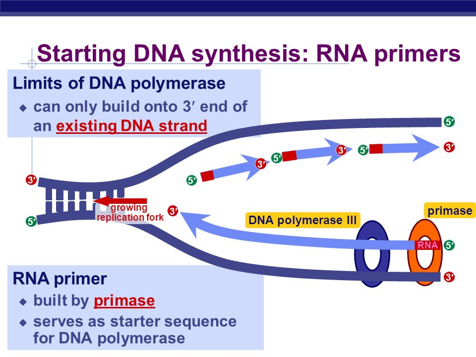 essay on dna replication Dna replication: dna replicates prior to cell division, so that chromosomes can be copied to give the same genetic code to every new diploid cell that is.