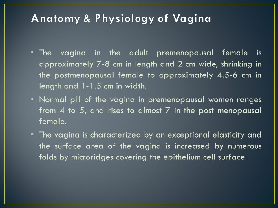 physiology of the vagina Abstract the morphology and physiology of both the vulva and vagina undergo  characteristic age- related changes over a lifetime at birth, these tissues exhibit.
