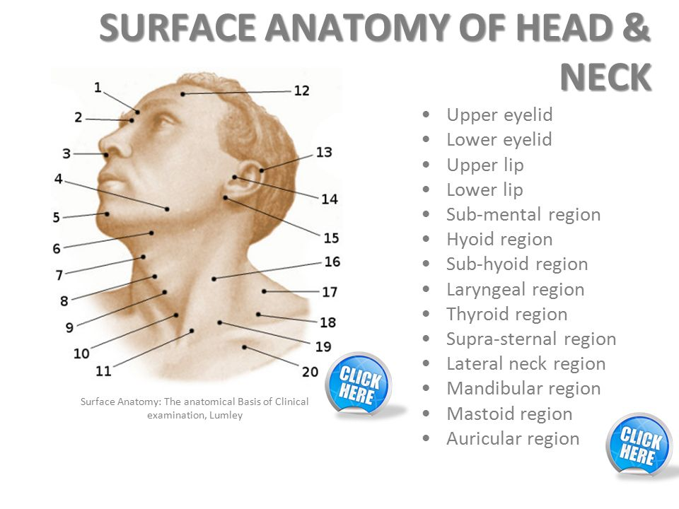 Upper neck anatomy