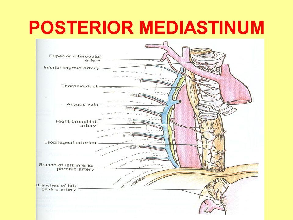 Anterior Mediastinum