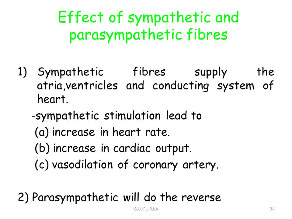 Effect of sympathetic and parasympathetic fibres
