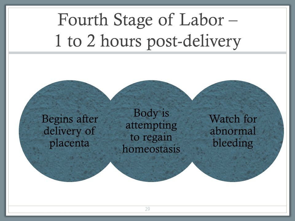 chapter 16 labor and birth processes ppt video online
