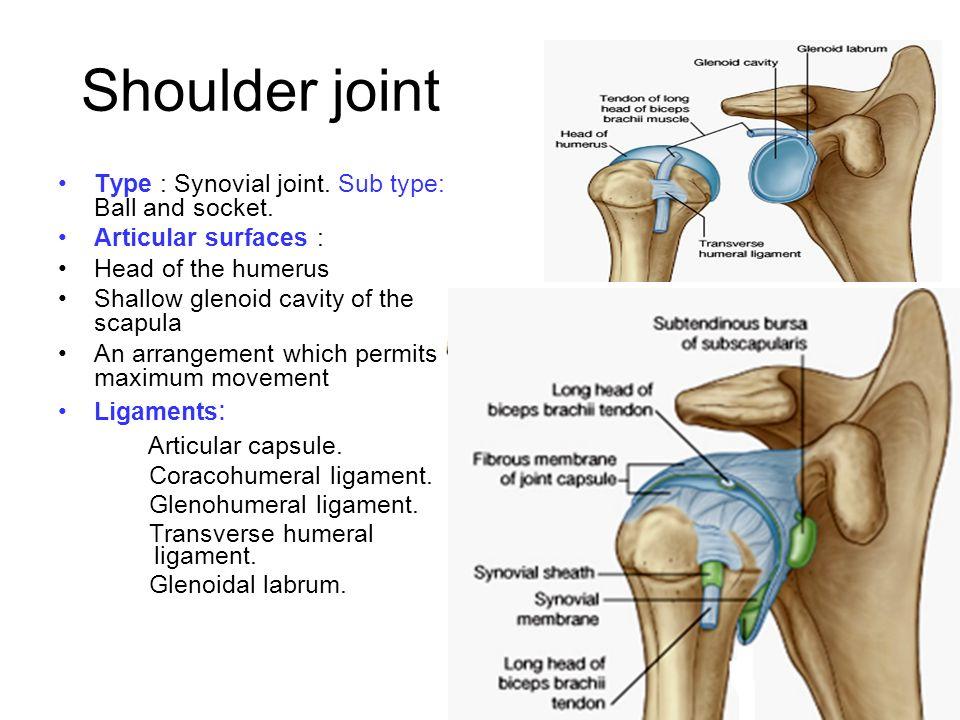 Joints of upper limb Dr A.Prasanna. - ppt video online ...