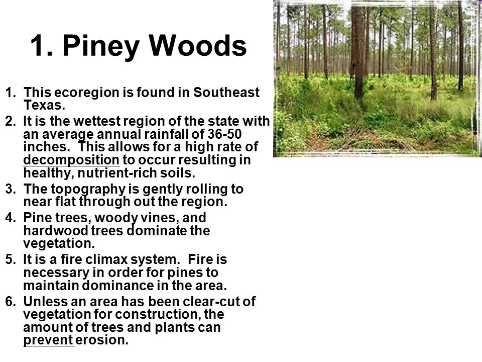 piney woods single girls Piney woods country life school is located in piney woods, mississippi the school was founded in 1909 by dr lawrence c jones it is mostly known as an afr.