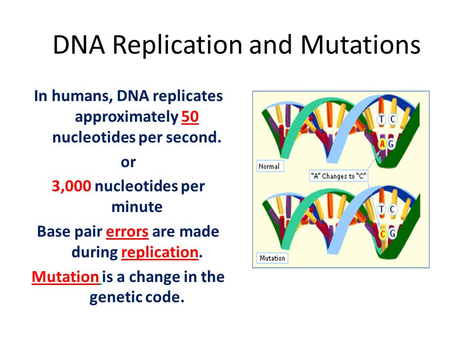 the process of dna replication and mutation Dna repair the process of dna replication is highly accurate spontaneous mutations occur through dna replication errors, whereas induced mutations occur through exposure to a mutagen mutagenic agents are frequently carcinogenic but not always.