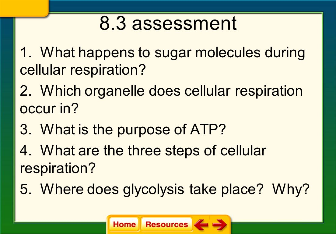 7 Glycolysis Takes Place In Cytoplasm Eukaryotes And Prokaryotes Do The Cell Prokaryotic Eukaryotic Cells