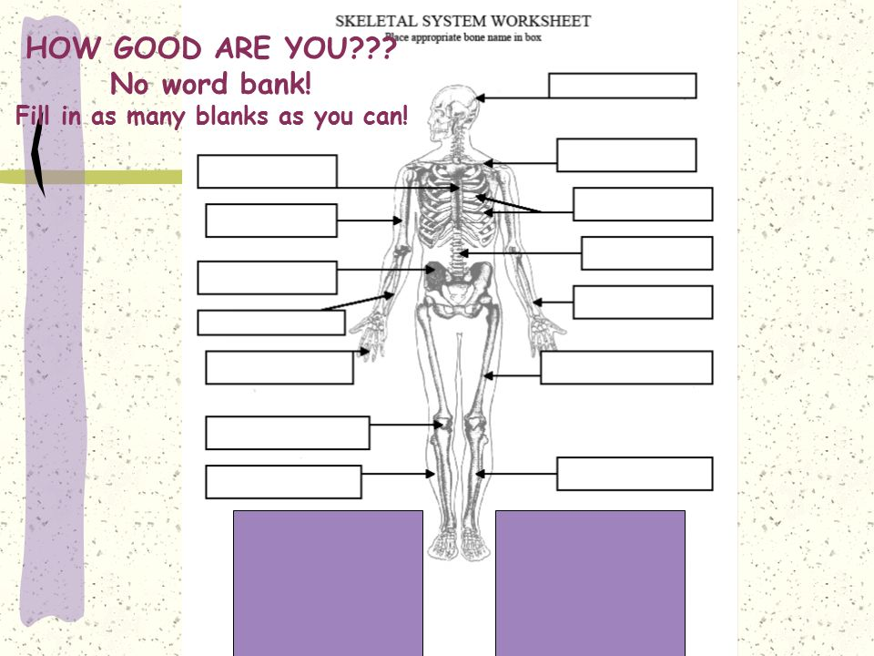 the skeletal system worksheet answer key photos mindgearlabs. Black Bedroom Furniture Sets. Home Design Ideas