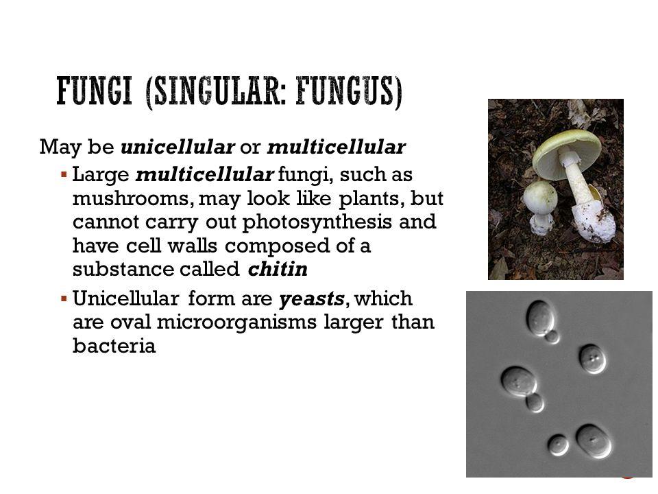 Is bacteria singular or plural? - Quora