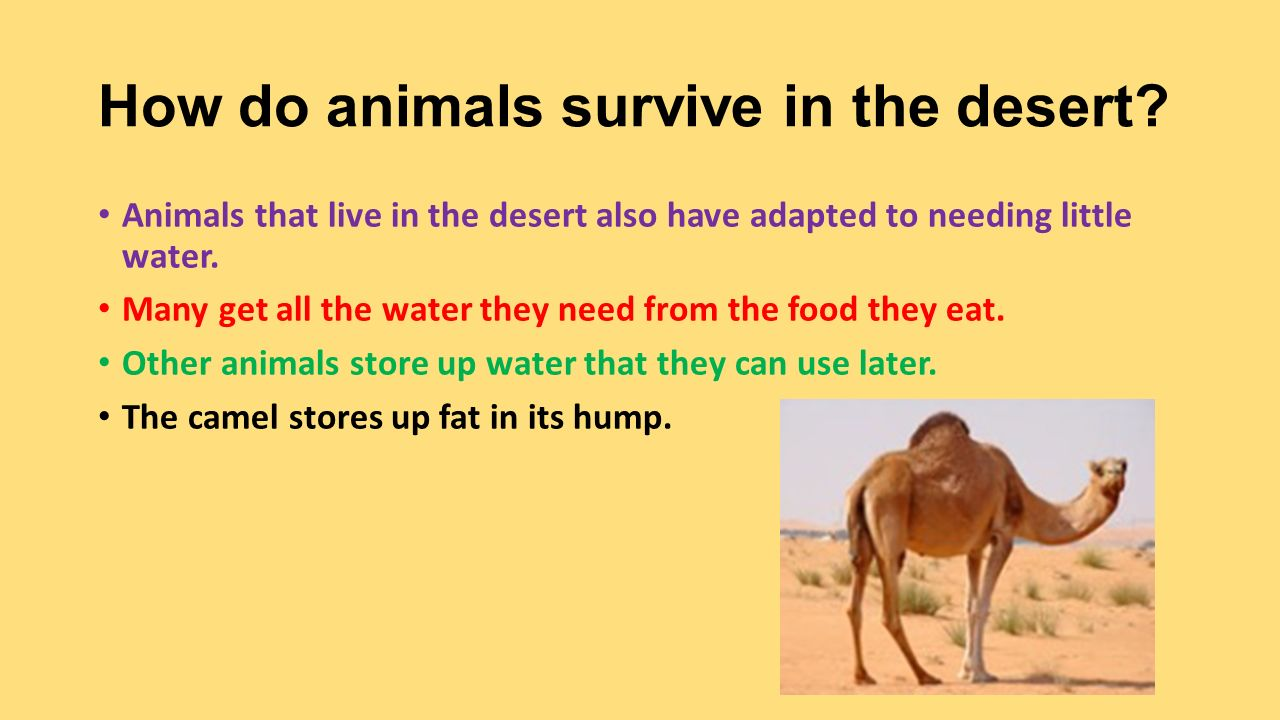 survive desert essay A cactus is a plant that grows where the soil is dry and rocky—most usually in the  desert a cactus doesn't have leaves like other plants do a cactus has spines.