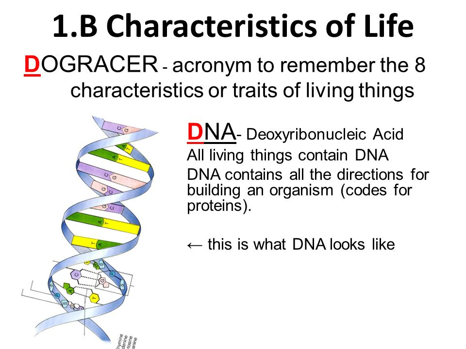 1.B Characteristics of Life - ppt download