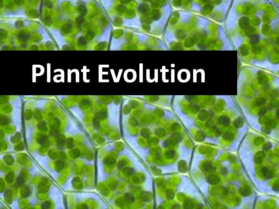 create a plant evolution timeline