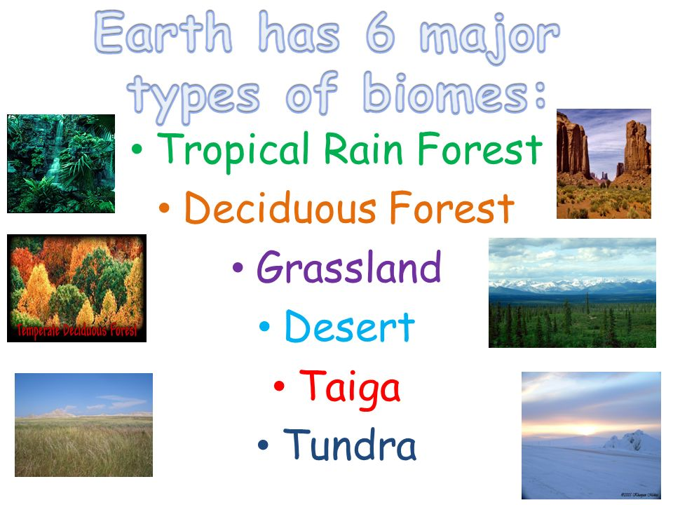 biomes of the earth essay