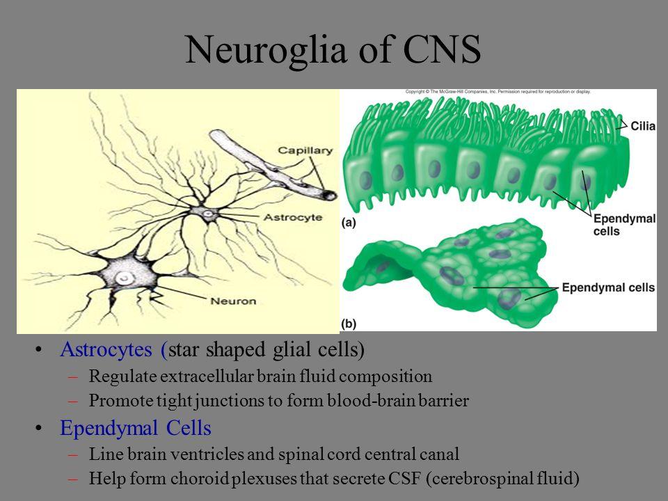 Nervous Tissue. - ppt video online download