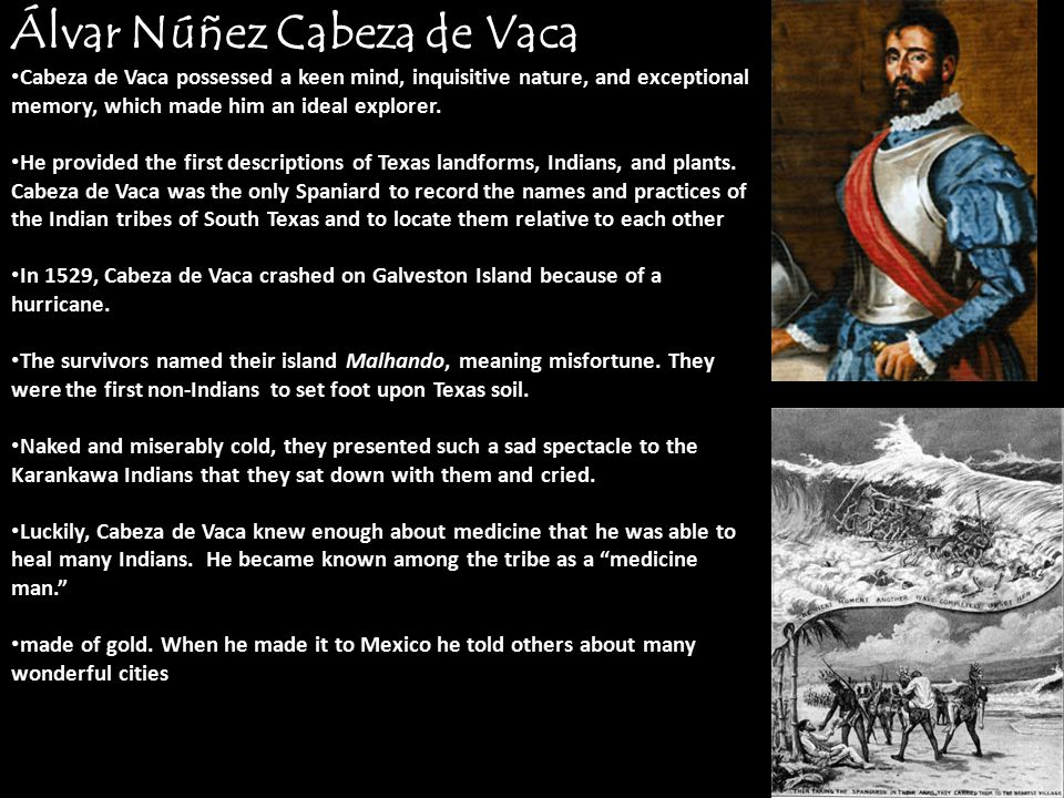 explorer lvar n ez cabeza de vaca Álvar núñez cabeza de vaca explorer Álvar núñez cabeza de vaca spent eight years in the gulf region of present-day texas and was treasurer to the spanish expedition under de narváez.