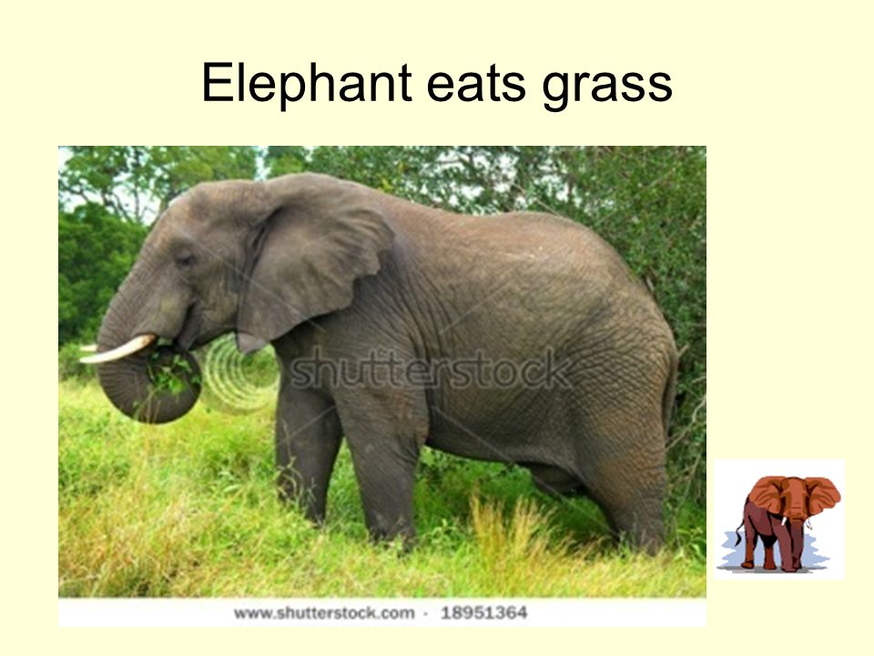 What Does An Elephant Sound Like >> Enjoy the day with Nandu - ppt video online download