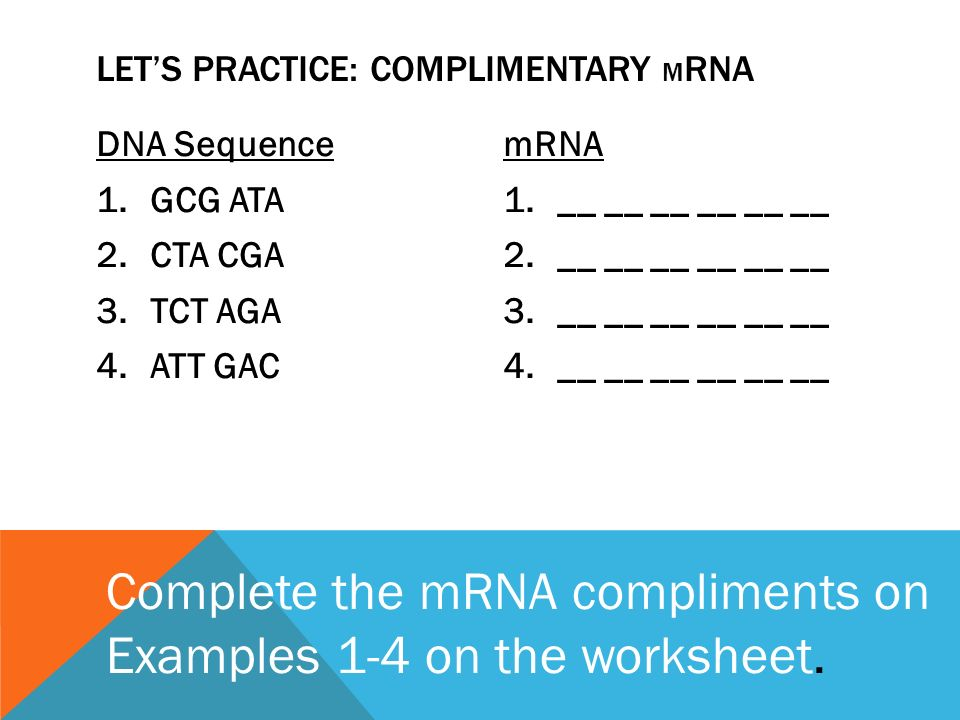 Big Thumb further Big Thumb furthermore Hs Inactive further Let E S Practice A  plimentary Mrna as well Lac Operon. on rna transcription translation worksheet part 2