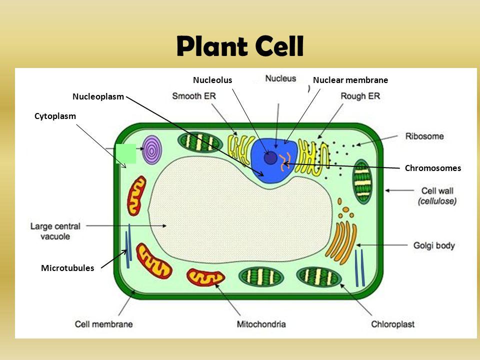 Cytology Branch of bio...