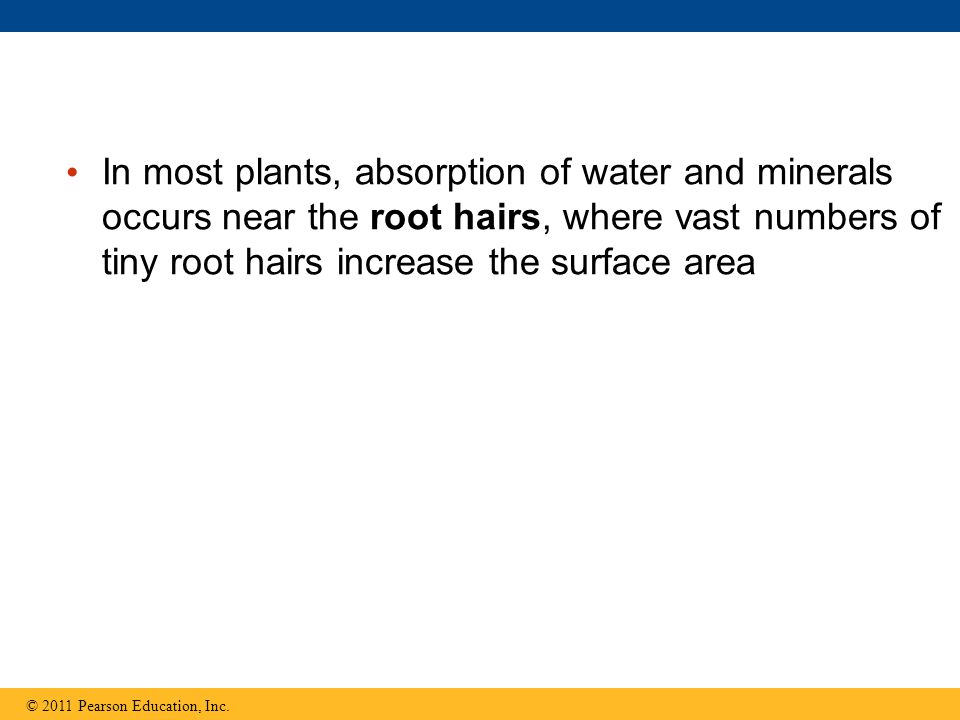 absorption of water in plants pdf