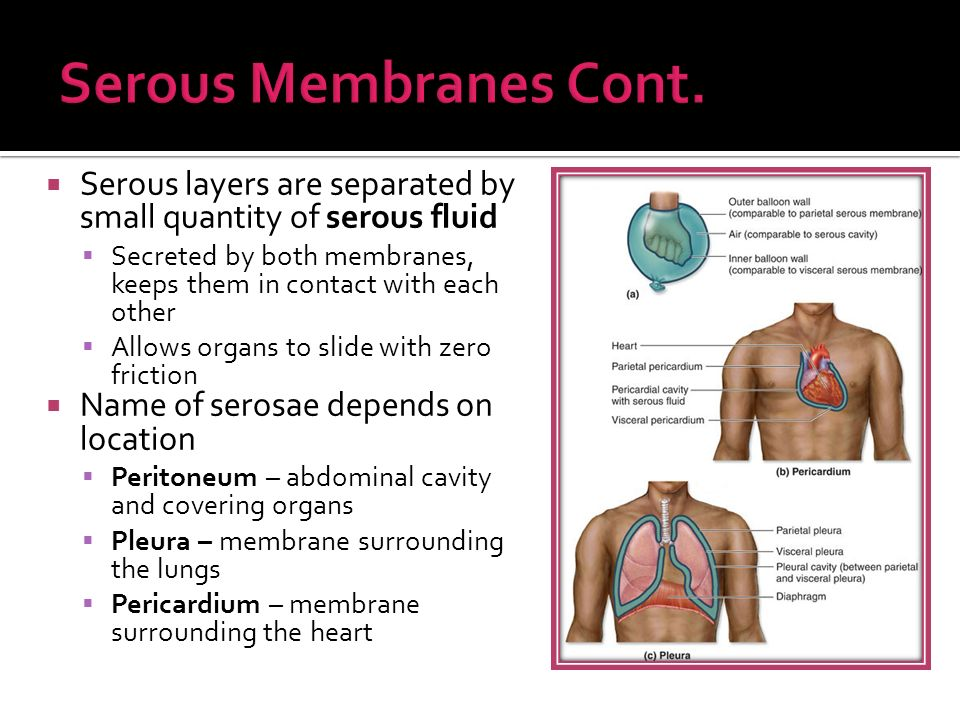 chapter 4 pages body membranes ppt download