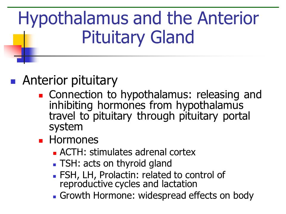 The Endocrine System Human Physiology. - ppt video online ...  The Endocrine S...