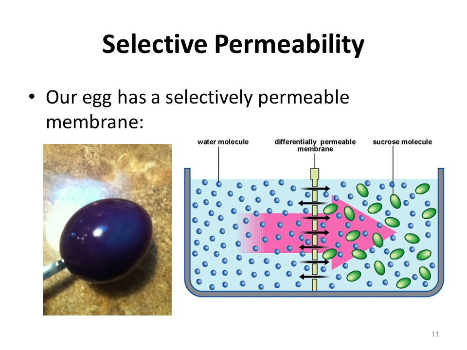 cell membrane and fluid mosaic model ppt download