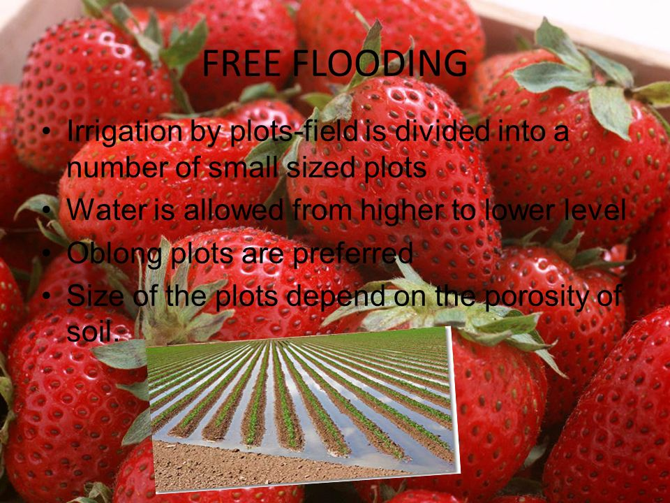 FREE FLOODING Irrigation by plots-field is divided into a number of small sized plots. Water is allowed from higher to lower level.