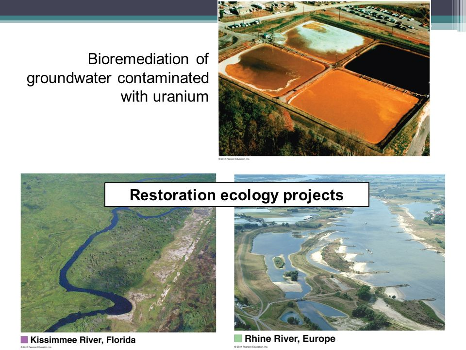 Restoration ecology projects